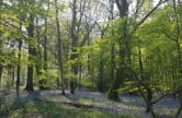 Explore Staffhurst Woods Oxted